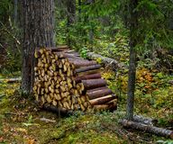 Woodpile Royalty Free Stock Photos