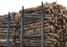 Woodpile timber stack forestry transport trees trunks forest industry. Timber wood stack forestry industry forest product woodpile Royalty Free Stock Photo