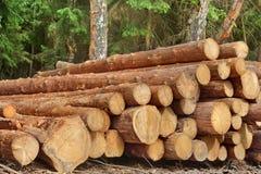 Woodpile van Gezaagde Pijnboom en Nette Logboeken voor Bosbouwindustrie stock afbeeldingen