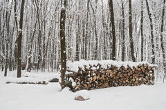 Woodpile in winter forest. Woodpile in winter and forest under snow Stock Images