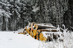 Woodpile in a winter forest Royalty Free Stock Photos