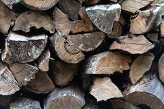 Woodpile. Firewood stacked in a  Old tree rotting in the woods royalty free stock images