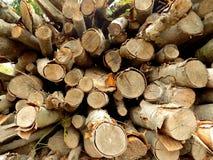 Woodpilebeschaffenheit Stockfotos