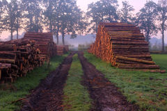 Woodpiles alongside a path. Woodpiles alongside a countryroad, illuminated by the first sunlight of an autumn morning Stock Photo