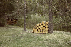 Woodpiles of big pieces of cut timber. Wooden trunks in a forest setting. Forestry industry, natural conservation, sustainable energy resources concept Stock Photos