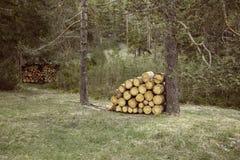 Woodpiles of big pieces of cut timber Stock Photos