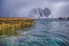 Woodpiles With Drying Cod and Pier at Lofoten Islands in Norway. Fjords and Ocean on The Background. Horizontal Image Stock Photography