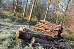 Woodpiles. For heating stacked near a wood Royalty Free Stock Photos