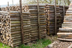Woodpiles. Lots of fire wood piled up Stock Image