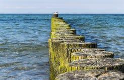 Woodpiles que dirigen adentro al mar Imagen de archivo libre de regalías
