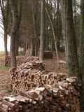 Woodpiles among trees. Firewood stacked between trees Royalty Free Stock Photo
