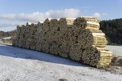 Woodpiles in Winter. Outdoor shot in Hessen, Germany Stock Photography