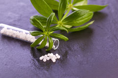 Woodruff herb globule. Alternative medicine Royalty Free Stock Image