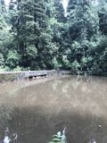 Woods湖 免版税库存照片
