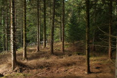 In The Woods. View of a dark and atmospheric woodland landscape Stock Photo