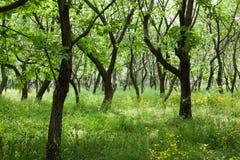 Woods Royalty Free Stock Photos