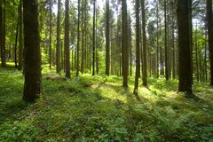 Woods. Trees in the woods in the sunlight Stock Photography