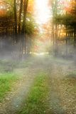 Woods. Autumn royalty free stock images