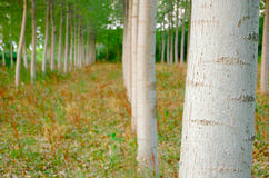 In the woods. A view of the woods by the Po River Royalty Free Stock Photography