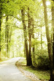 Winding Forest Road in Percy Warner Park in Nashville stock image