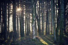 Woods. With a beam of sunlight stock photography