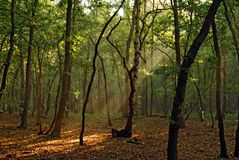 Woods. Beautiful morning sun shining in the forest Stock Photo