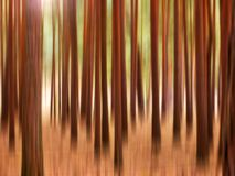 Woods. Abstract wood Stock Photography