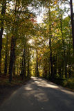 Woods Royalty Free Stock Image