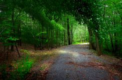 In the woods. Tunnel in the woods royalty free stock photo