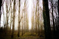 The Woods Stock Photos
