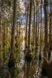 Woods of a Alligator Hole. Nice view of a Everglades alligator hole Stock Photography