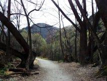 Woods in Arrowtown (Gladden Fields), New Zealand Stock Photo