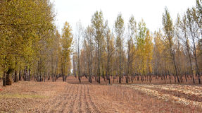 The woods of autumn Royalty Free Stock Images