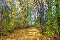 Woods with Autumn colors Stock Photography