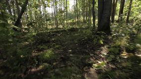 In the woods stock video footage