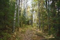Into the woods in autumn and learning something new. Signs which tell something about what`s within that area of the forest was put to guide and inform the royalty free stock photo