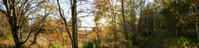Woods during autumn - Panorama picture Royalty Free Stock Images
