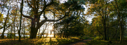 Woods during autumn - Panorama picture Stock Photo