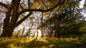 Woods during autumn Royalty Free Stock Photography