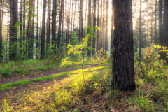 In the woods Royalty Free Stock Photography
