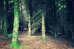 Into the woods. Bright green, dark, creepy, woods Royalty Free Stock Photos