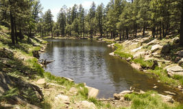 Woods Canyon Lake Arizona. Trees reflected in Woods Canyon Lake in Arizona royalty free stock photos