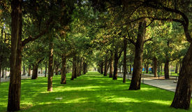 Woods in city park. Woods with beatiful light and shadows Royalty Free Stock Photos
