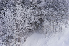 Woods covered with hoar under ski lift Royalty Free Stock Photography
