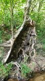 Hollowed tree stump royalty free stock photo