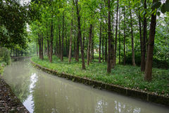 Woods by creek in spring. Woods near the brook in verdant spring Stock Image