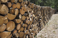 Woods. Cut and stacked woods in forest Royalty Free Stock Photos