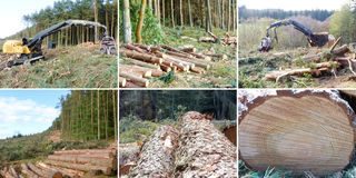 Woods cutting concept - Multiple images Royalty Free Stock Image