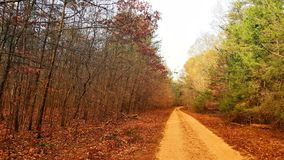 Woods with Dirt Road royalty free stock images