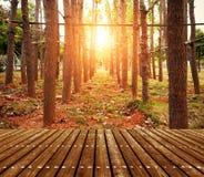 Woods at dusk Stock Photos